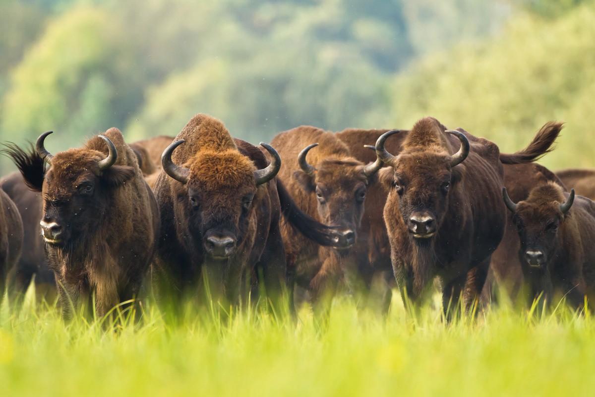 3 марта – Всемирный день дикой природы
