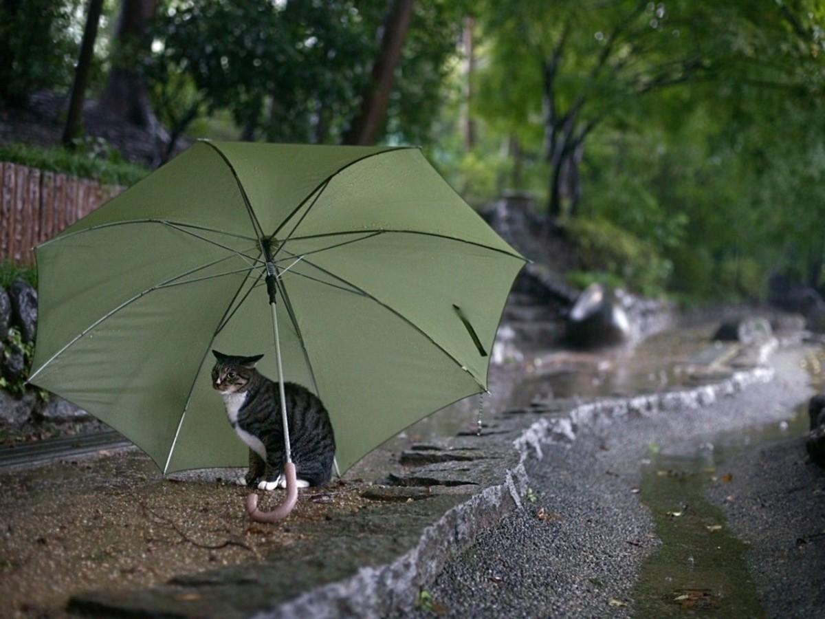 Погода в Бобруйске