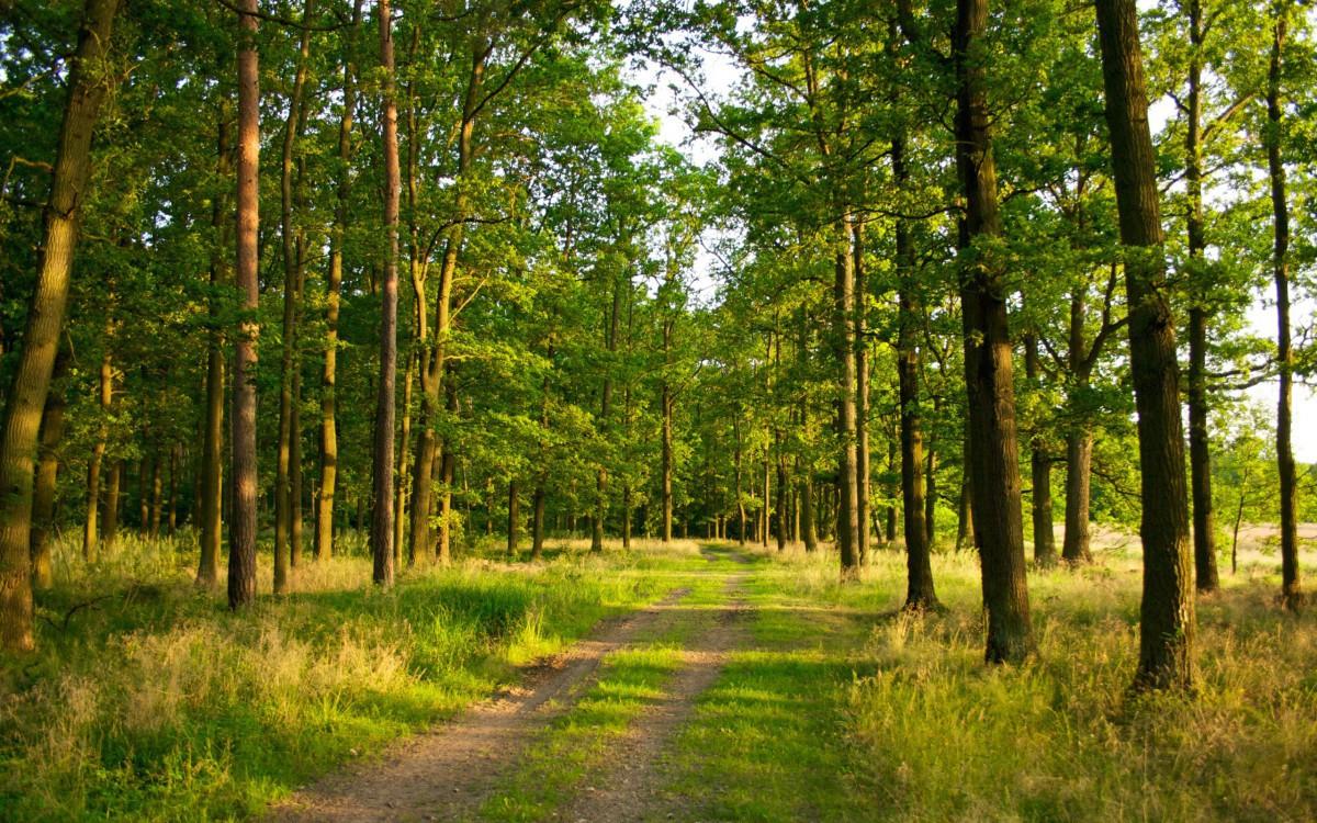 В связи с сухой погодой в Беларуси массово закрывают леса для посещения