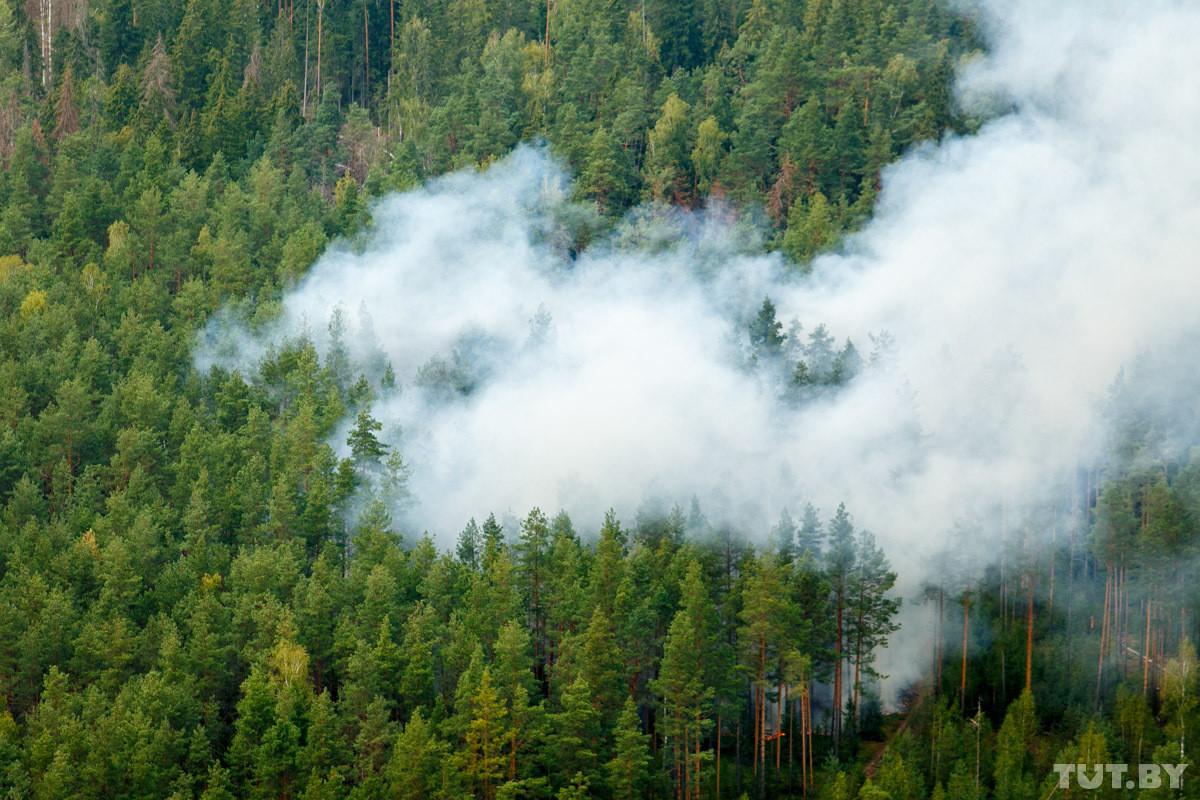 В 90 районах Беларуси запрещено посещать леса. К выходным ожидается полный запрет