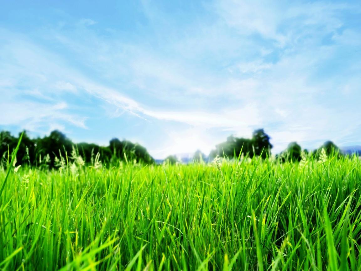 Председатель горисполкома требует от коммунальных служб активнее заниматься обкосом травы