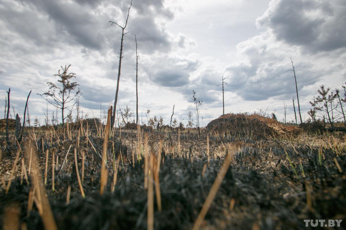 В стране горят леса. Самые крупные очаги – в Брестской и Могилевской областях