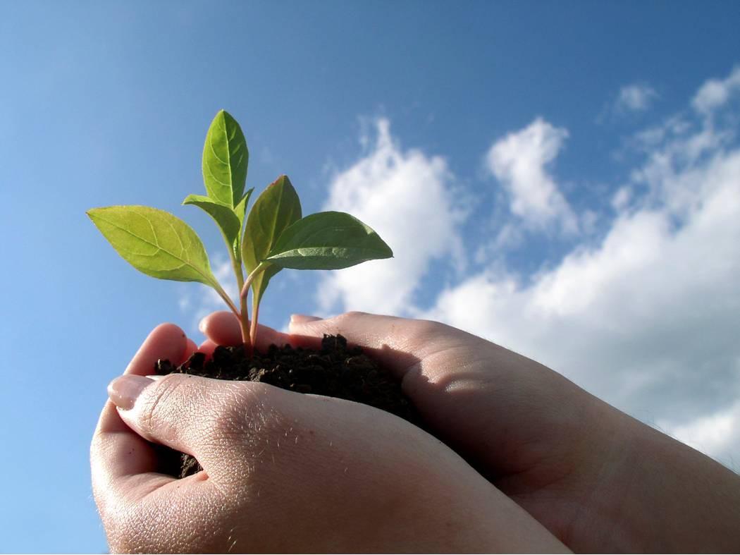 В Бобруйске проходят мероприятия по «омоложению» старой растительности