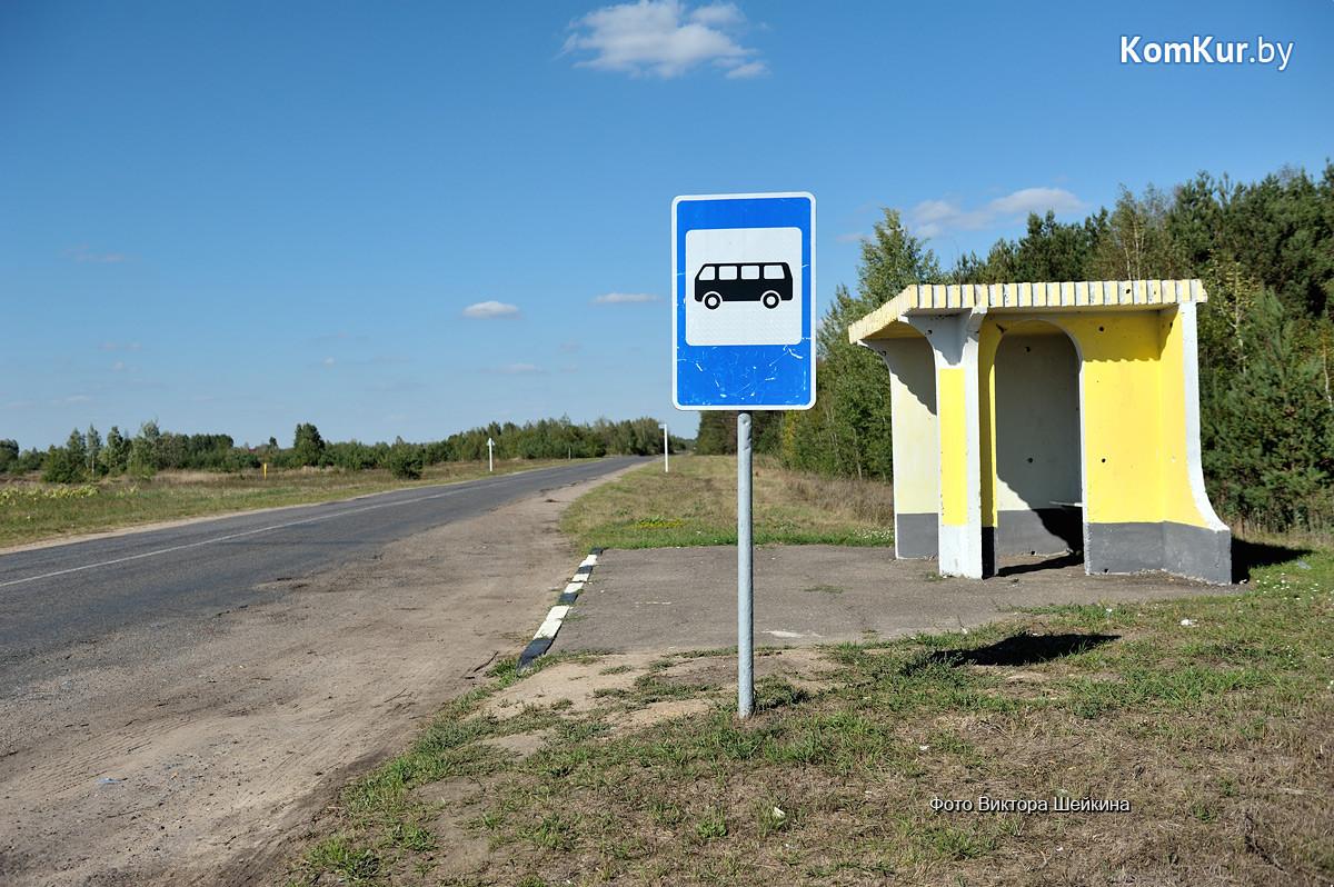 Бобруйский Хатико уже три месяца ждет хозяина на автобусной остановке