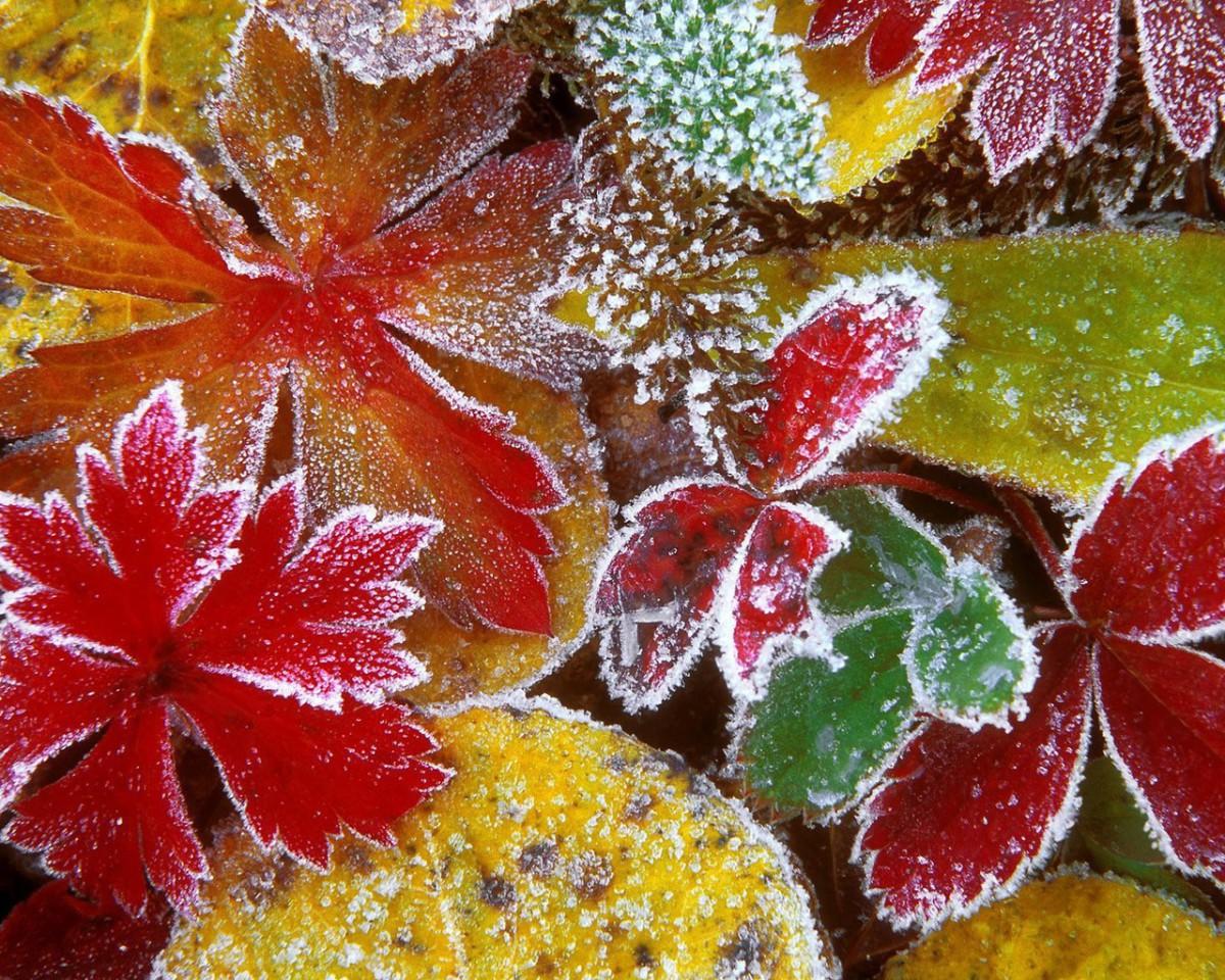 Северный ветер принесет в Беларусь ночные заморозки и температуру ниже нормы