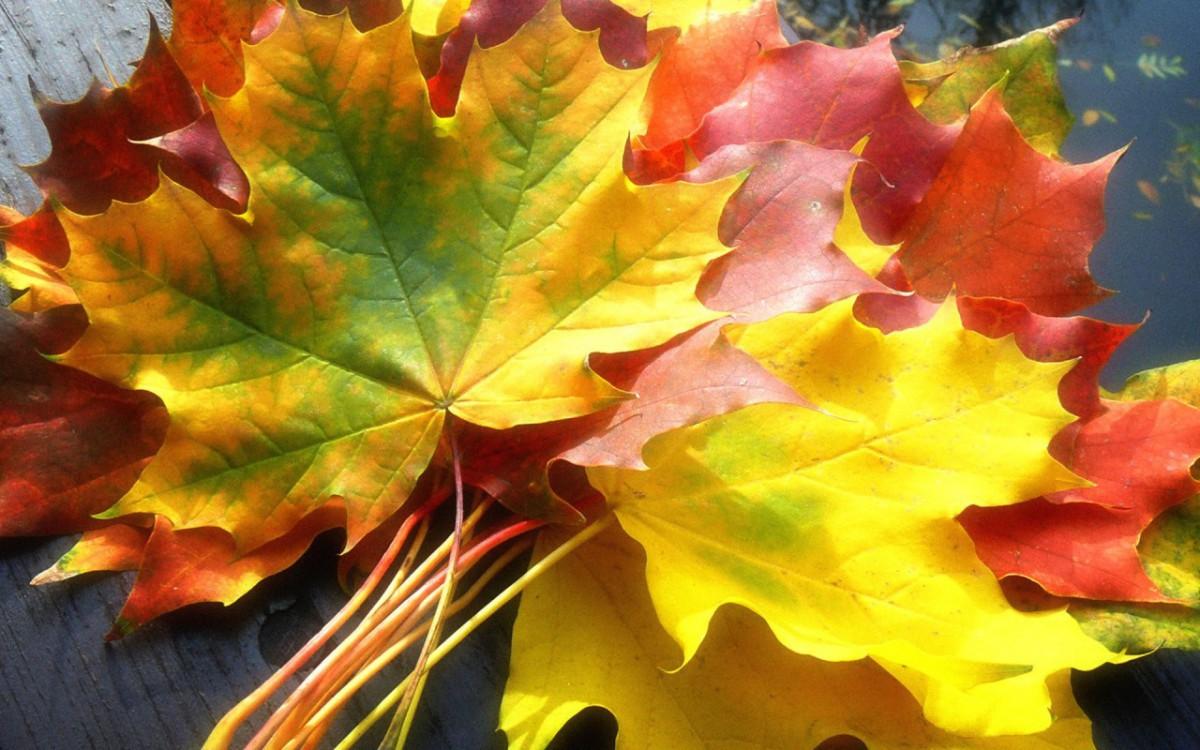 Последняя неделя октября будет холодной, но без осадков