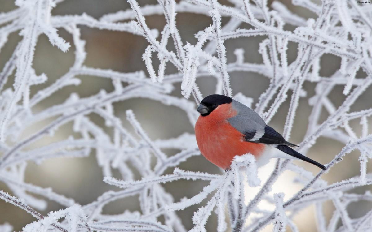 4 января в Беларуси ожидается до -26 °C