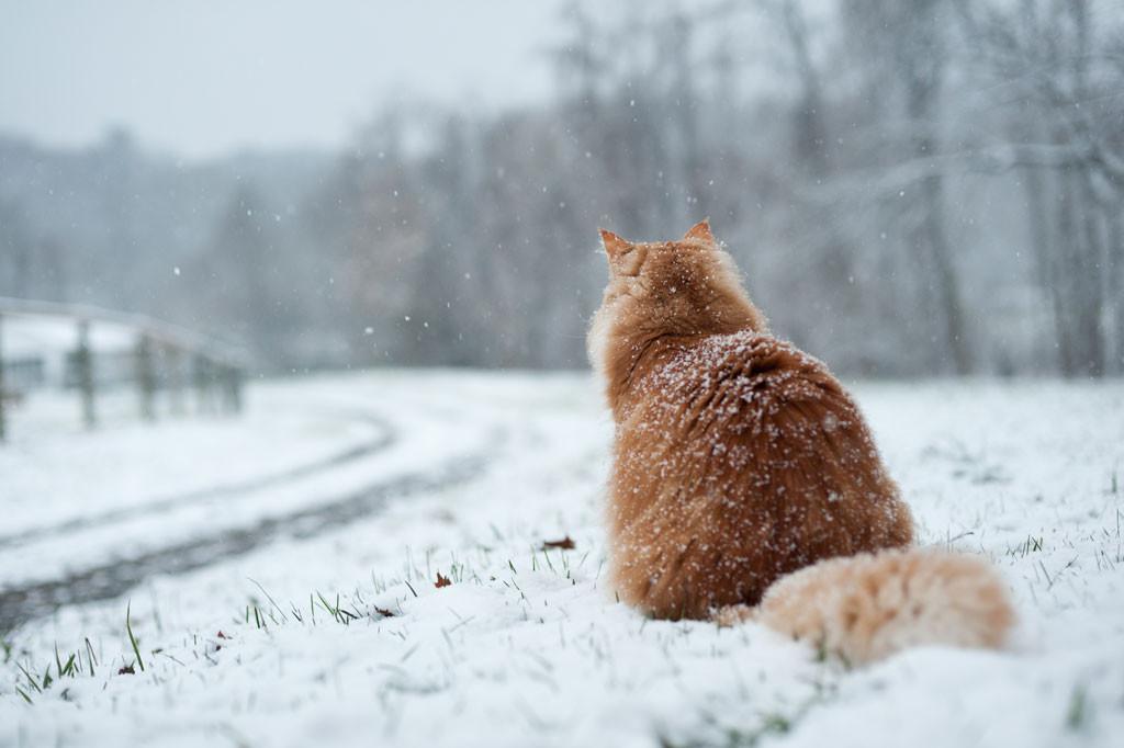 Снег и гололедица ожидаются в Беларуси в ближайшие сутки