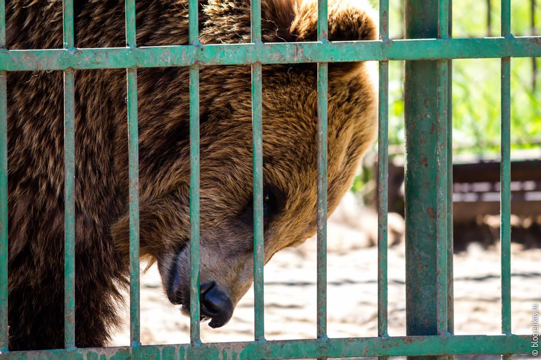 «Для вас Машенька, а для нас хищник». Как медведица сбежала из агроусадьбы и перепугала деревню