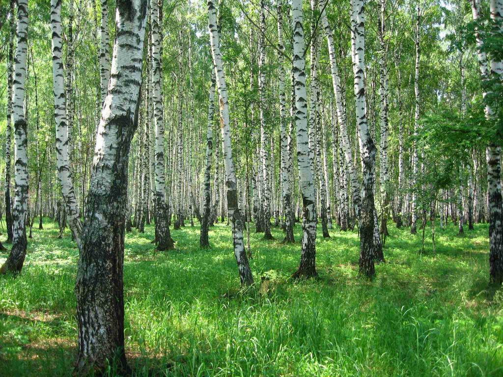 В лесопосадке Бобруйска обнаружили тело человека