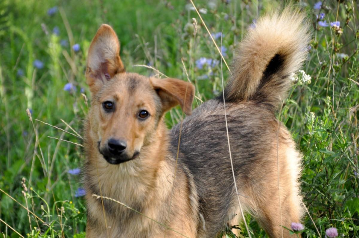 Помощь бездомным животным. Как спасти маленькую жизнь?