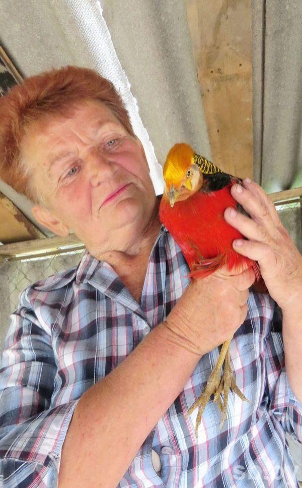 66-летняя жительница Бобруйского района изобрела рецепт здоровья и долголетия: гоняет на машине, вышивает картины и разводит павлинов и фазанов