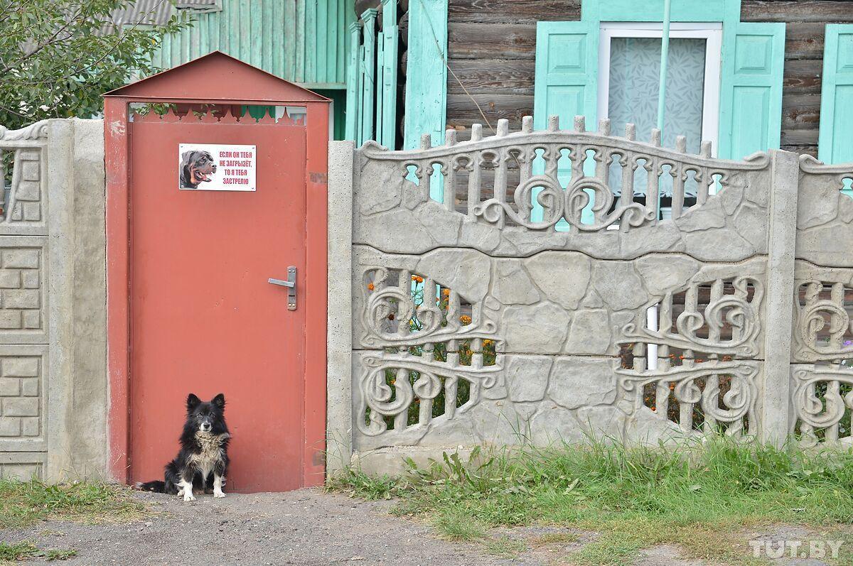 Собаки загрызли пенсионера в Бобруйске