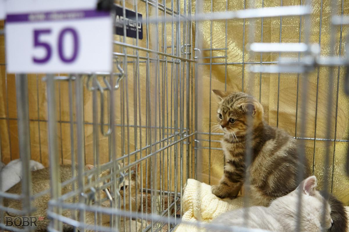 В Бобруйске проходит международная выставка кошек