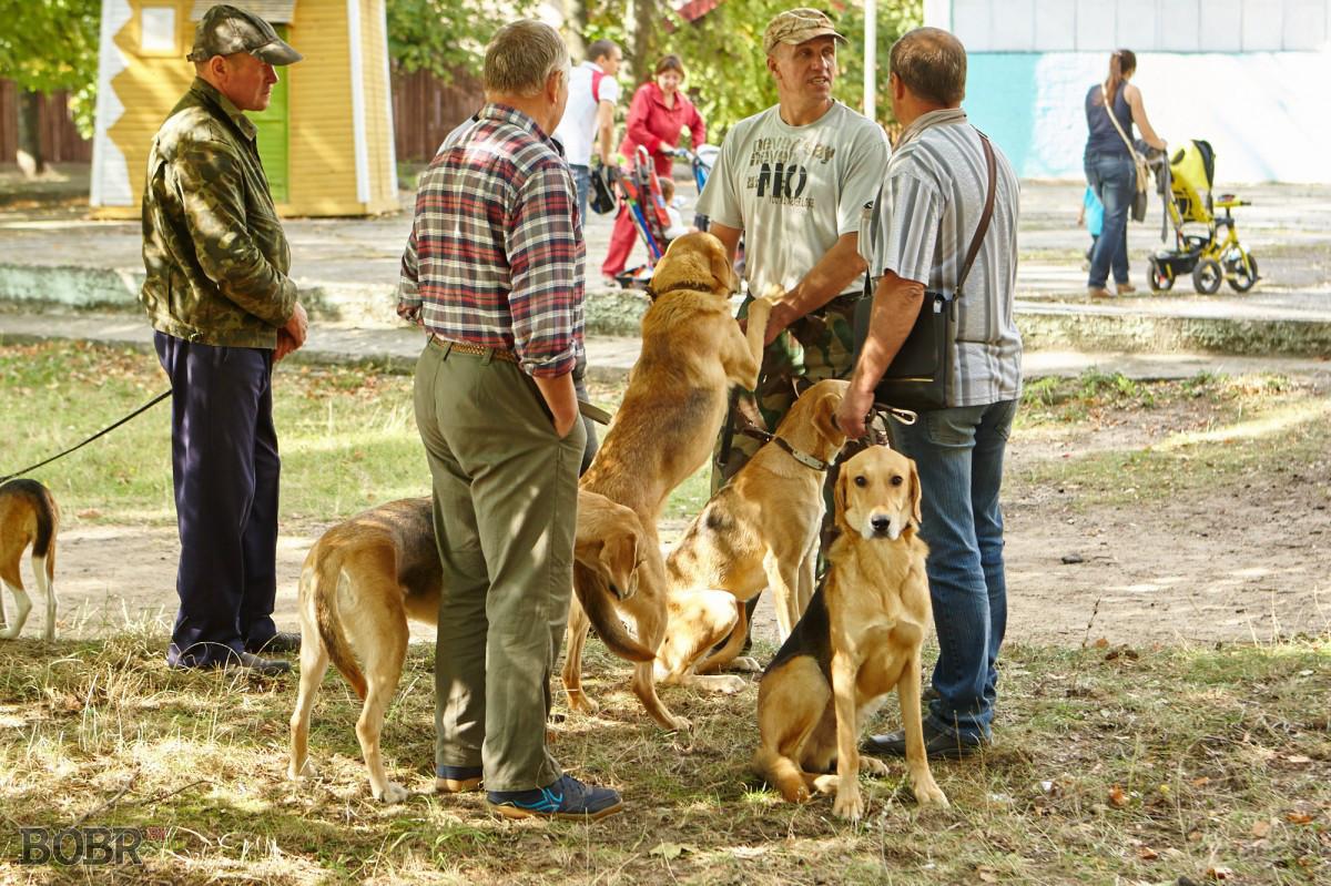 В Беларуси изменятся ставки налога для владельцев собак