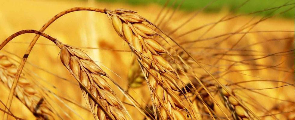 В Беларуси отмечают День работников сельского хозяйства и перерабатывающей промышленности агропромышленного комплекса