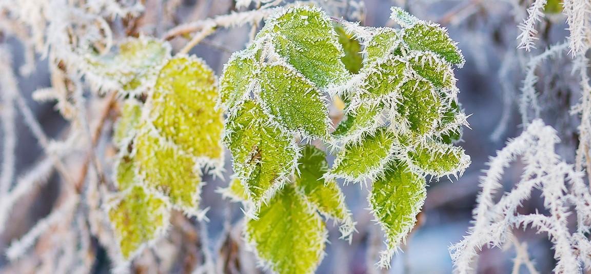 Зимний характер погоды установится в Беларуси в последние дни ноября