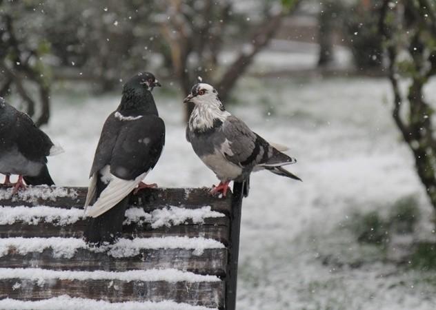 Комфортная зимняя погода ожидается в Беларуси в выходные