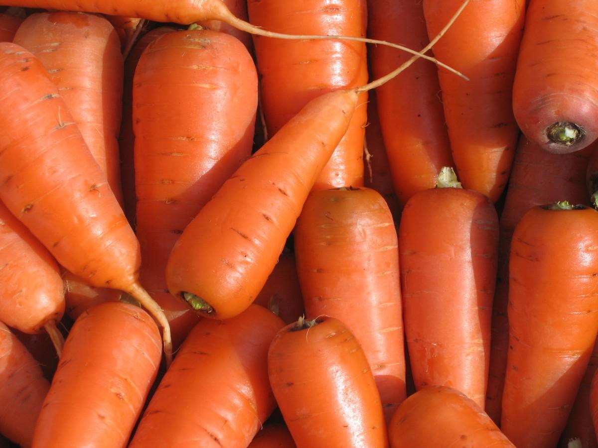 Незанятых граждан приглашают на переборку моркови