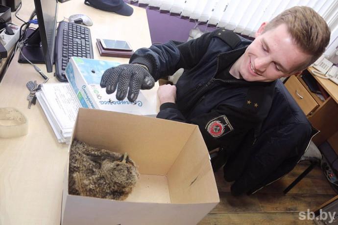Возле здания милиции в Бобруйске нашли совенка