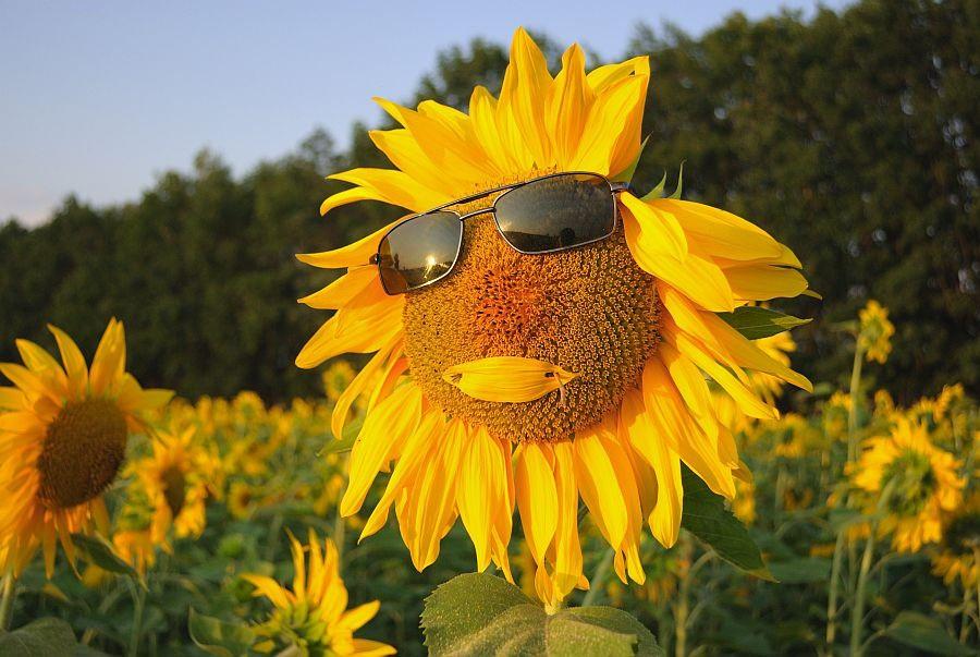 Понедельник объявлен «оранжевым» из-за жары. К среде станет еще горячее