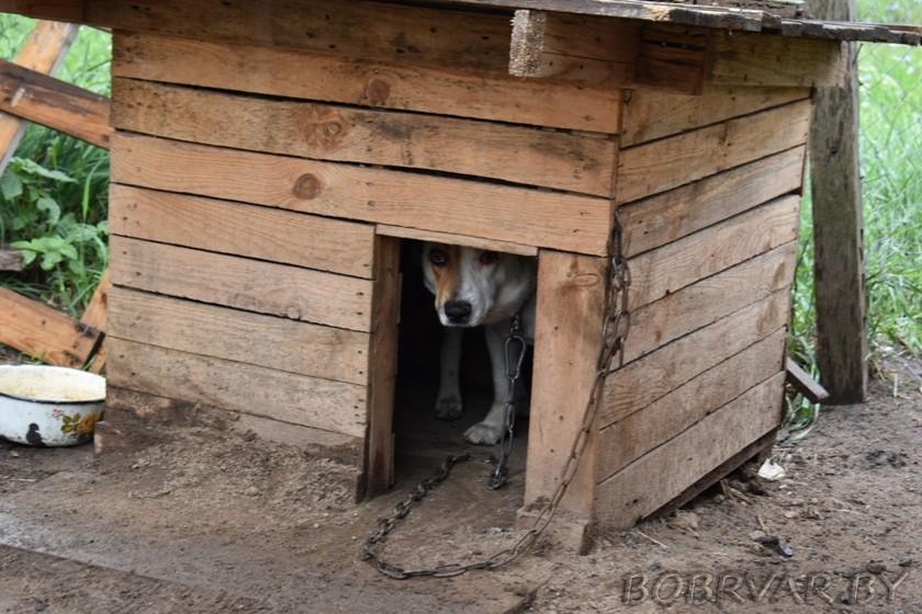 В Бобруйске волонтеры дарят животным вторую жизнь