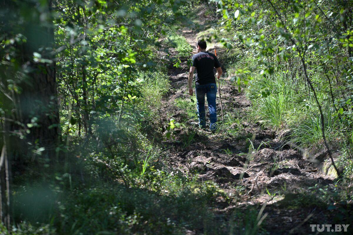 Собака вернулась без хозяйки. Как в лесах и болотах ищут пропавших пенсионеров-грибников