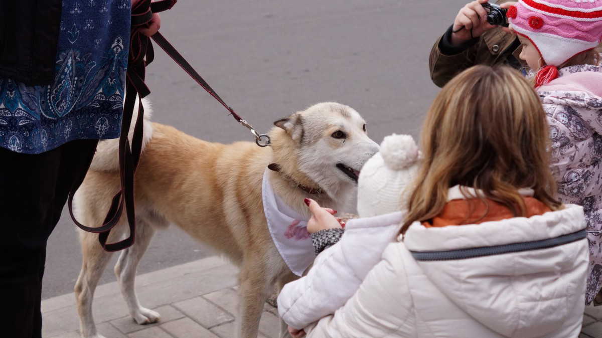 В Бобруйске прошла благотворительная акция «Будь моим другом»