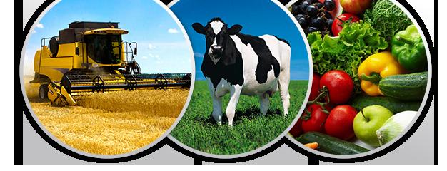 Ежегодно в третье воскресенье ноября в Беларуси отмечается профессиональный праздник – День работников сельского хозяйства и перерабатывающей промышленности