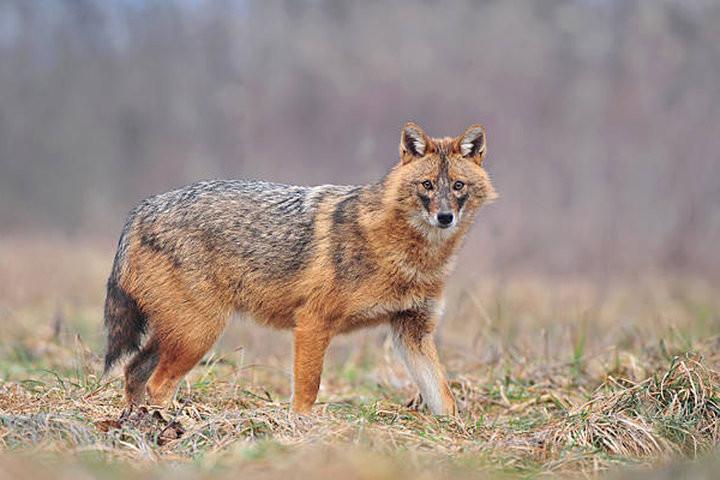 Новое животное в списке млекопитающих Беларуси: «странного зверя» помог узнать анализ ДНК