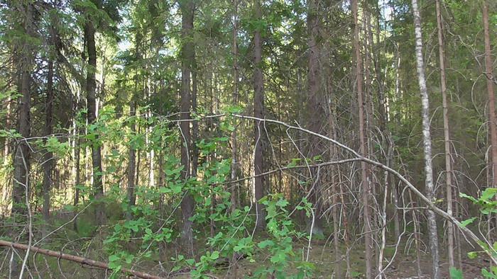 Масштабные незаконные рубки леса выявлены в лесном фонде Бобруйского и Краснопольского лесхозов