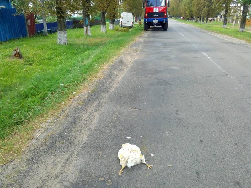 В серьезное ДТП попал бобруйчанин из-за курицы