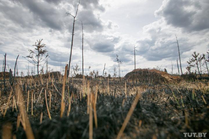 Засохшие колосья, безжизненные деревья, мор рыбы. Как Беларусь переживает жаркое лето 2018 года