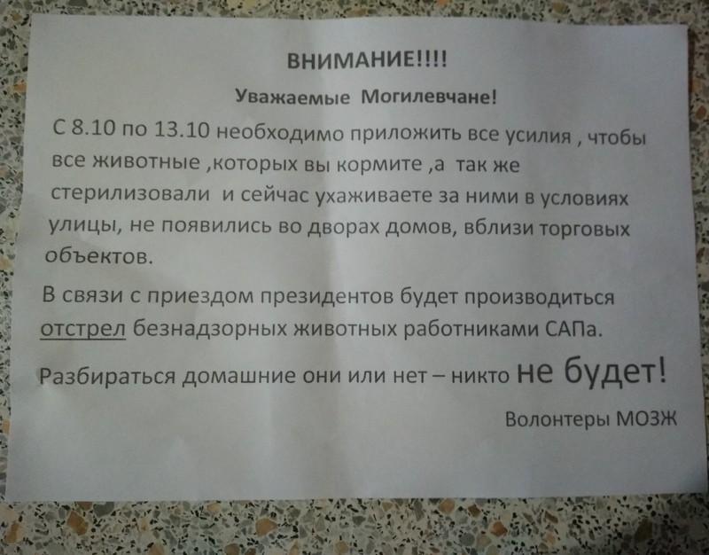 В Могилев приедут Путин и Лукашенко, поэтому сейчас там отстреливают бездомных животных