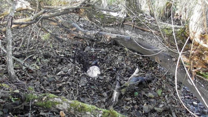 Охотников задержали по подозрению в незаконной добыче косули