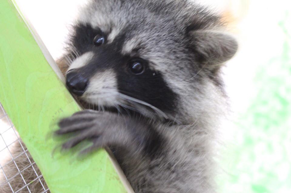 12 января в Бобруйске откроется мини-зоопарк