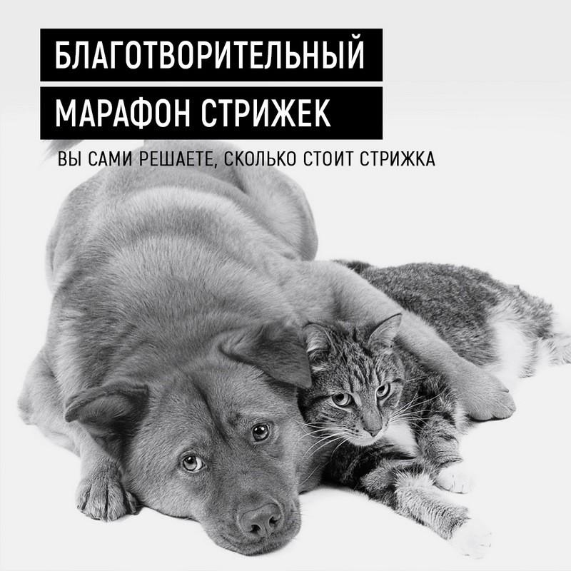 Благотворительный марафон стрижек пройдет в Бобруйске