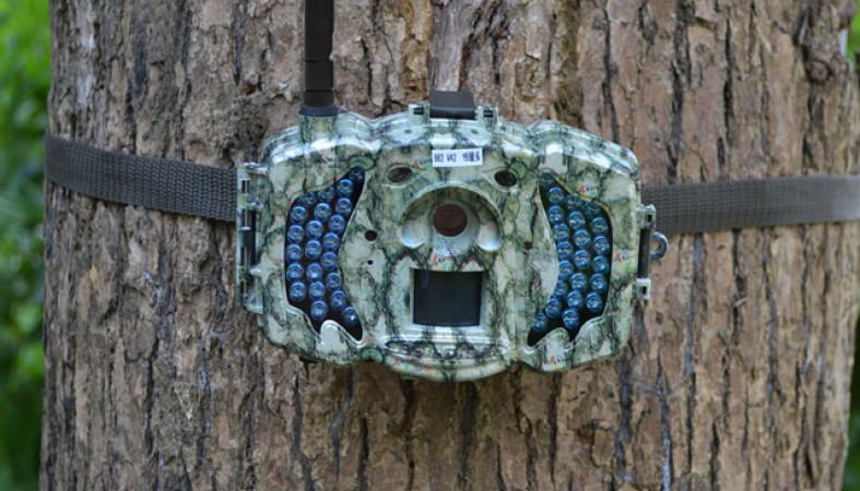 В лесхозах региона имеется 82 системы фотовидеофиксации