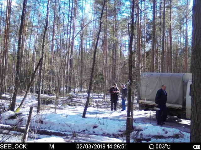 На Бобруйщине нелегальный дровосек попал в фотосети