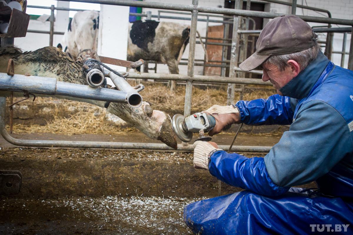 «Обидно, непонятно». Что происходит на ферме, где президент устроил разнос за «обоср…ных коров»