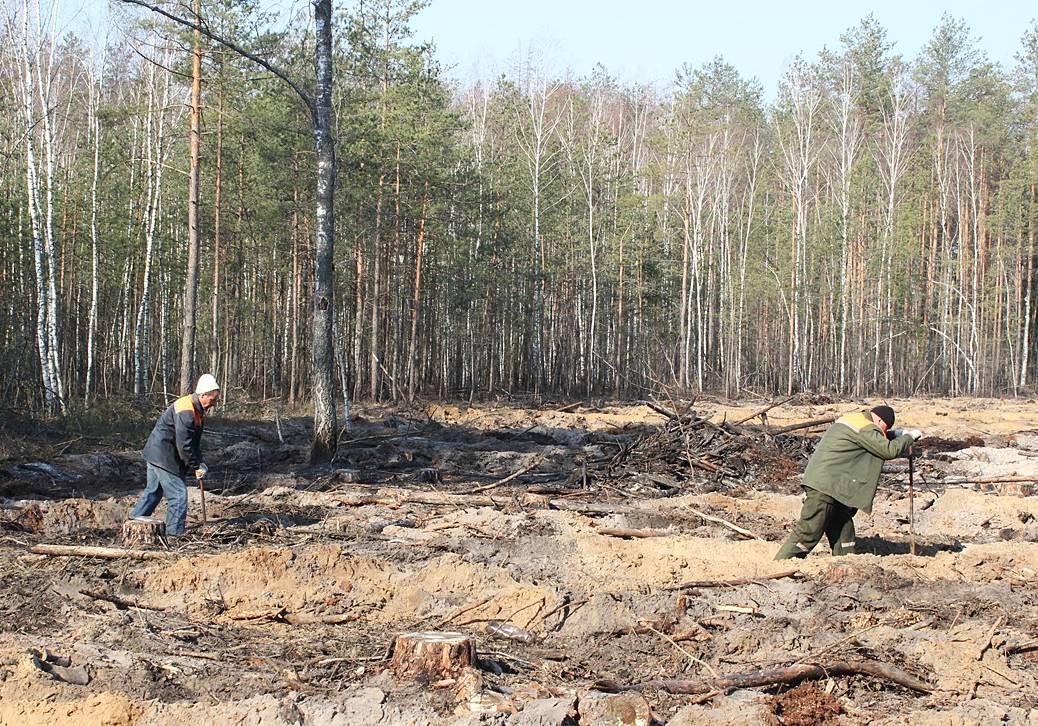 Сотрудники различных организаций Бобруйского района 6 апреля приняли участие в посадке леса.