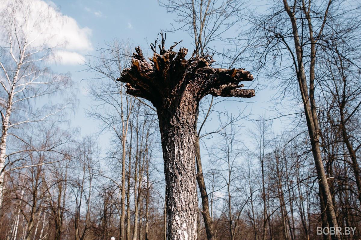 Смоленская дорога дерево корнями вверх фото