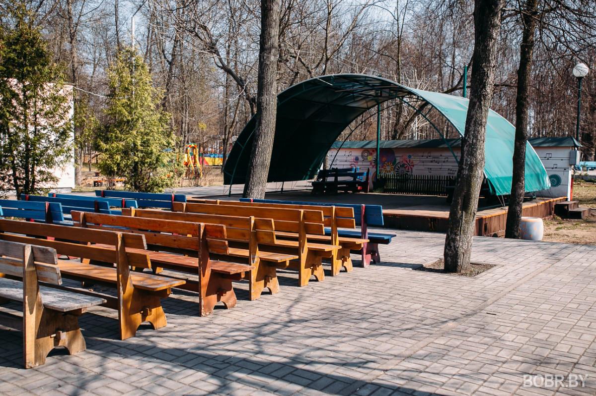 Тайна перевернутых деревьев в бобруйском парке раскрыта