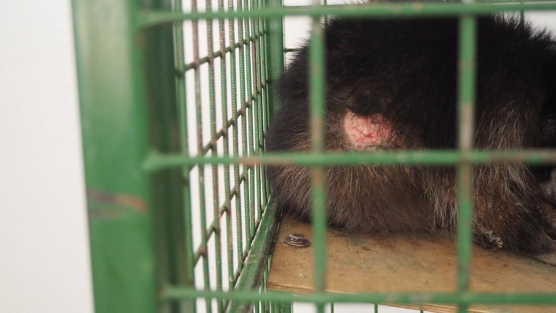 «Ребенок заплакал от увиденного». В Бобруйске проходит жестокая выставка диких животных