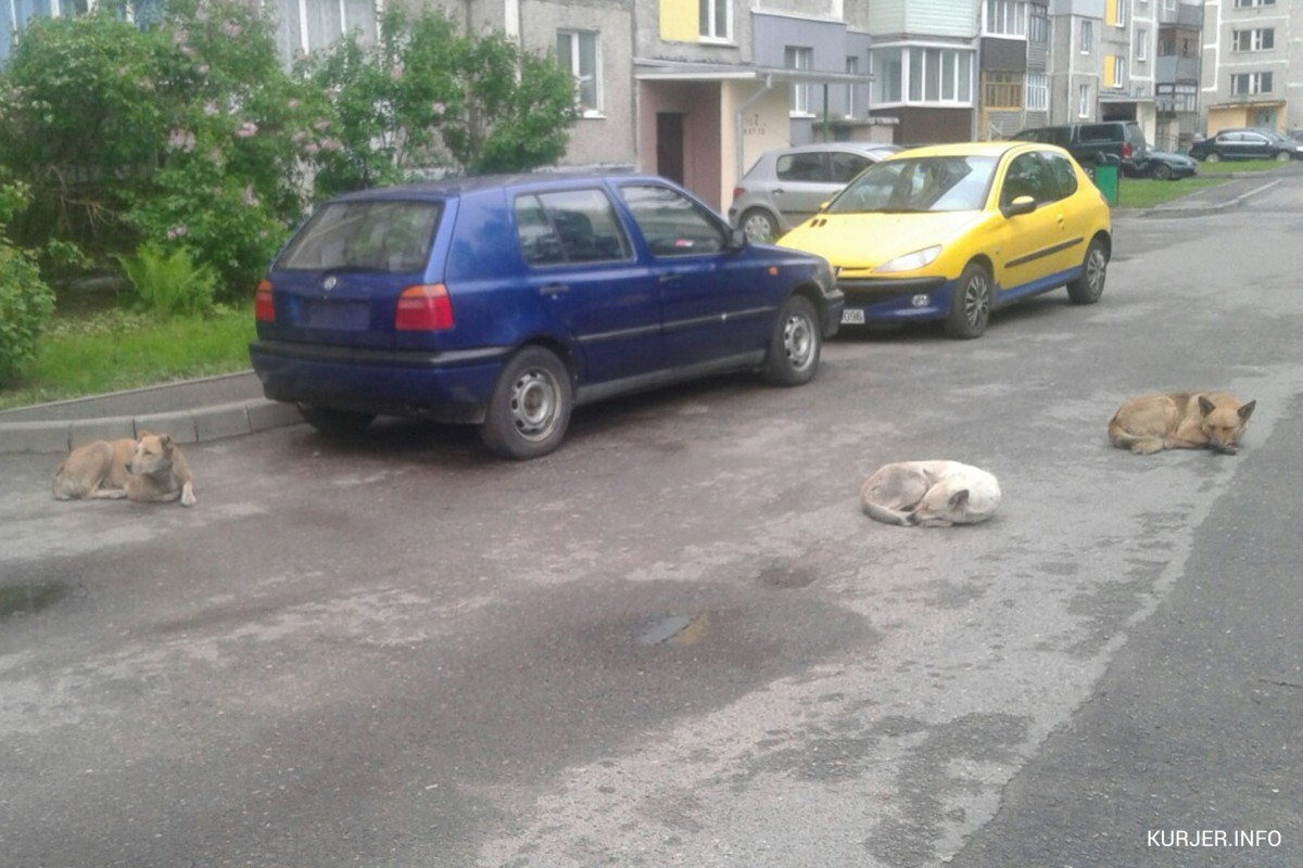 Бродячие собаки из Слуцка загрызли 10 овец