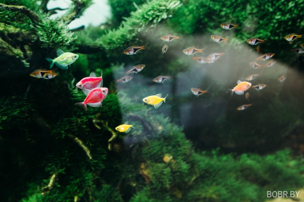 Искусство под водой и как на нем заработать. Бобруйский акваскейп