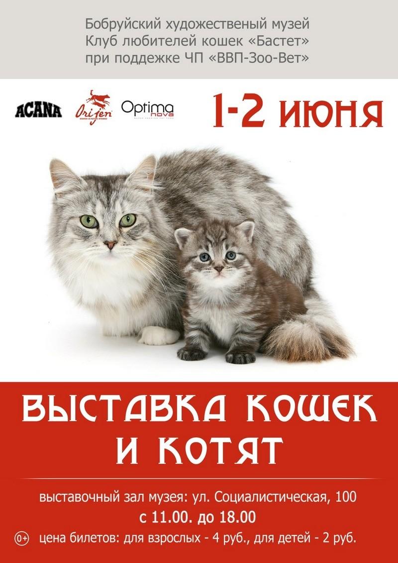 В Бобруйске пройдет выставка кошек