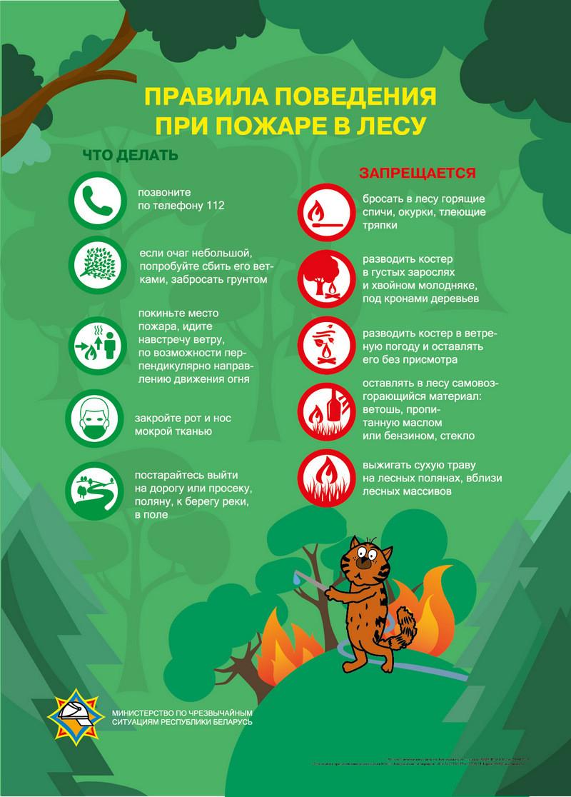 Завершена ликвидация лесного пожара в Пуховичском районе