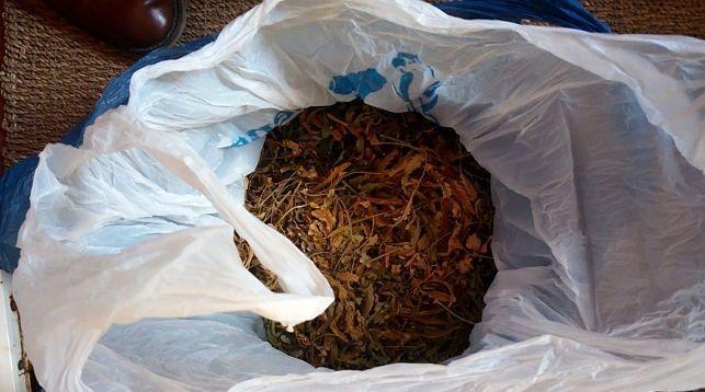 Житель Бобруйского района выращивал дома коноплю
