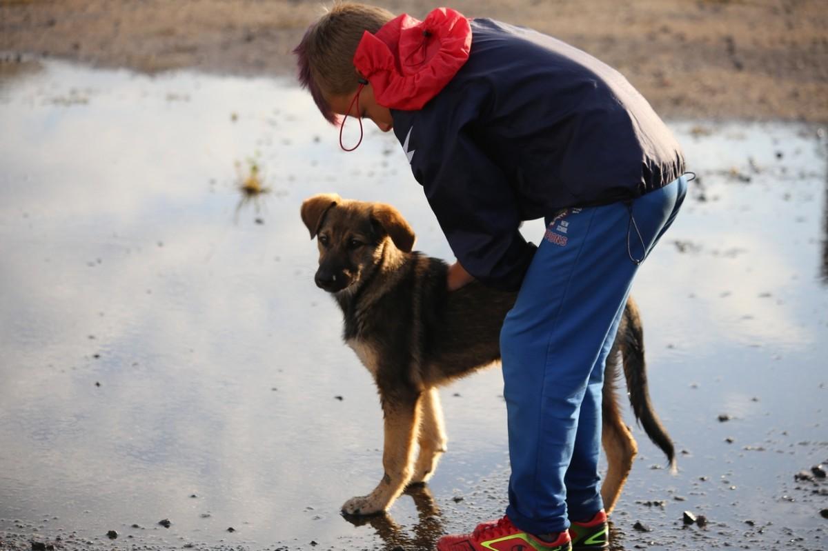 Собака выбежала на поле в матче «Лиды» и «Белшины» и не хотела уходить